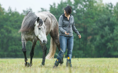 Choice and control in horse training