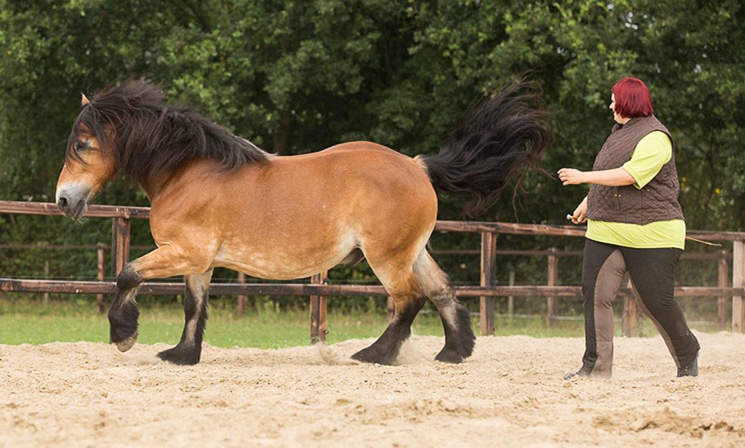 Dominanz und Rangordnung im Pferdetraining