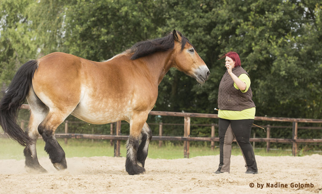 Vom Umgang mit dominanten Pferden