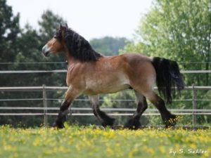 Das Arbeiten mit positiver Verstärkung hilft Pferden, selbstbewusster zu werden