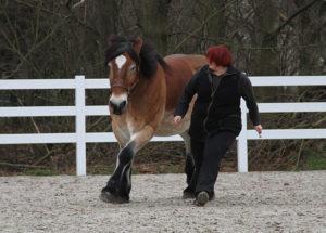 Selbstbewusste Pferde leben zufriedener