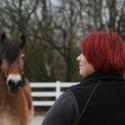 Natural Horsemanship und die Sache mit der Rangordnung