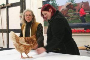 Clickertraining mit Hühnern auf Hof Steigerwald
