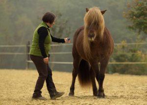 Positives Pferdetraining mit Clickertraining
