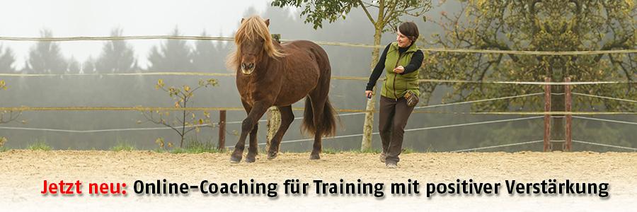 Online-Coaching für positive Verstärkung, Clickertraining und Zirkuslektionen