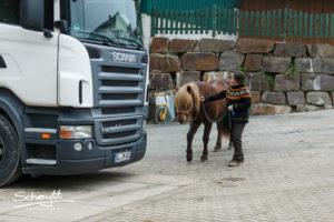 """""""Druck"""" muss man nicht üben - Vorausschauend trainieren gibt Pferd und Mensch Sicherheit"""
