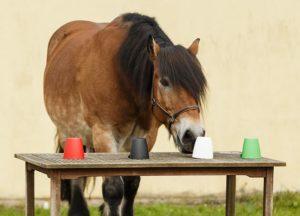 Positives Pferdetraining mit Denksport