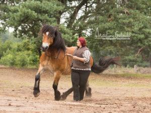 Achtung und Respekt durch positives Pferdetraining
