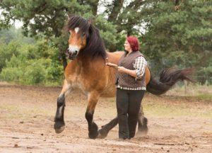Positives Pferdetraining mit Freiarbeit