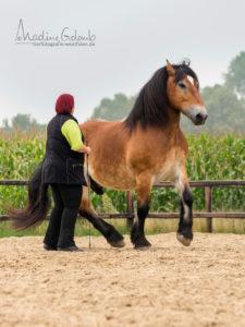Freiheitsdressur - Ein ehrlich motiviertes Pferd kann über sich hinaus wachsen