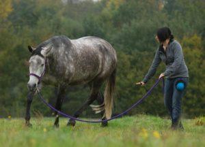 Positives Pferdetraining mit Gymnastizierung und Mobilität