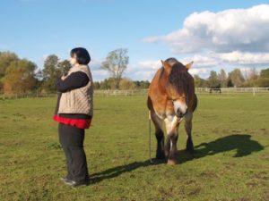 """Falsch eingesetzt, können Pferde """"Pause"""" als negative Strafe empfinden, da sie den Entzug von Aufmerksamkeit und Belohnung bedeuten"""