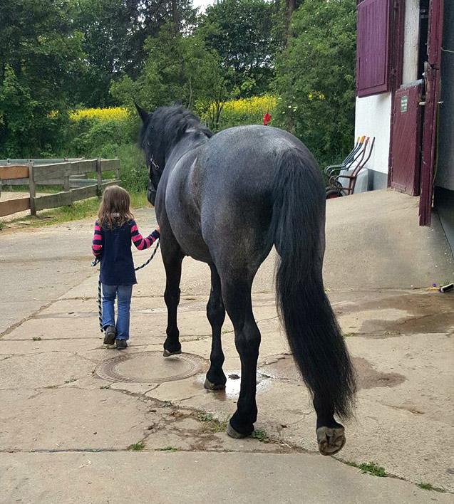 Das Training des Pferdes ist Erwachsenensache © Sandra Schweig