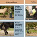 Lerntheorie im modernen Pferdetraining