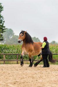 Ehrlich motiviert - Die Arbeit mit dem Pferd ist vor allem Arbeit an sich selbst. (Foto: Nadine Golomb)