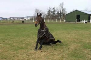 Das sieht man, wenn Pferde sich kratzen oder Wälzen (Foto: Nina Meyhoff)