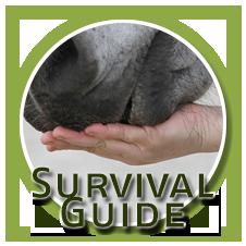 Survival Guide für den Umgang mit Futterlob