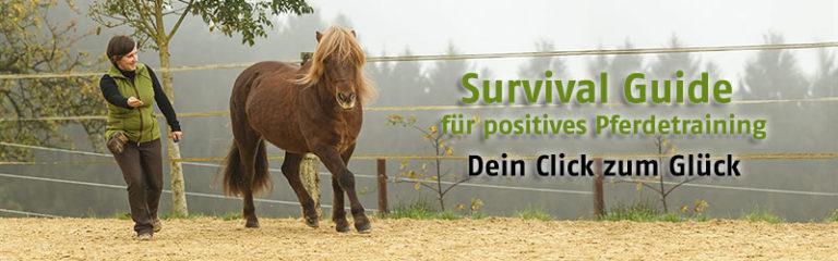 Survivalguide für Clickeranfänger und positives Pferdetraining mit Futterlob