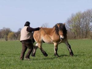 Es gibt immer eine Alternative im Sinne des Pferdes