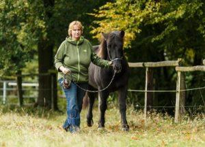 Positives Pferdetraining in Umgang und Verhalten