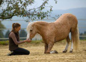 Positives Pferdetraining mit Zirkuslektionen